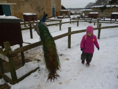 I'm not sure if she's nervous about the snow or the peacock