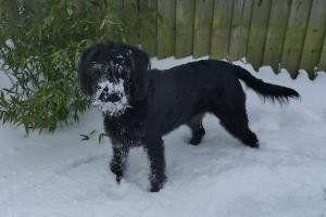 Snow Monster