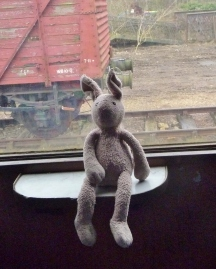 Amber's Photograph of Bunny