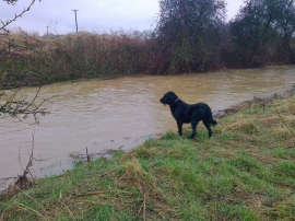 Don't think I fancy the river today Mummy