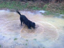 Blurry Action Shot: Even Kara loves jumping in muddy puddles