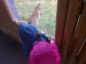 Watching the Servals