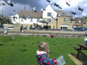 Feeding the Birds (not Ducks)