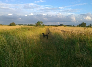 Walking Kara across the fields