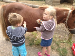 Grooming Elsie the Shetland pony