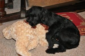 Our little Kara as a puppy
