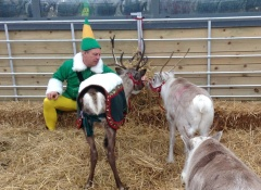 Reindeer and elves