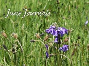 JuneJournals